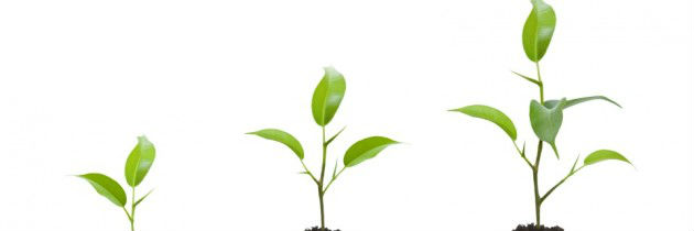 Make Growth Mode Business-as-usual at Your Firm